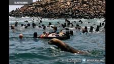 Si estás en Lima y no puedes moverte, esta opción puede ser tu salvación. Estas islas se ubican frente al Callao y lo chévere es que te puedes bañar con lobos de mar, siempre y cuando contrates un operador certificado. Además de nadar con lobos también podrás observar a una comunidad de pingüinos de Humboldt.