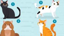 El gato que más te guste delata qué es lo que necesitas en una pareja
